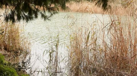 Relaxing pond water reflections wind #waterripples