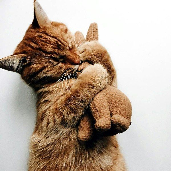 Популярные записи по теме «животные» Красивые кошки