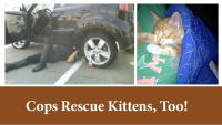 A Garland motorcycle officer helped rescue a precocious kitten.  Check out this story!