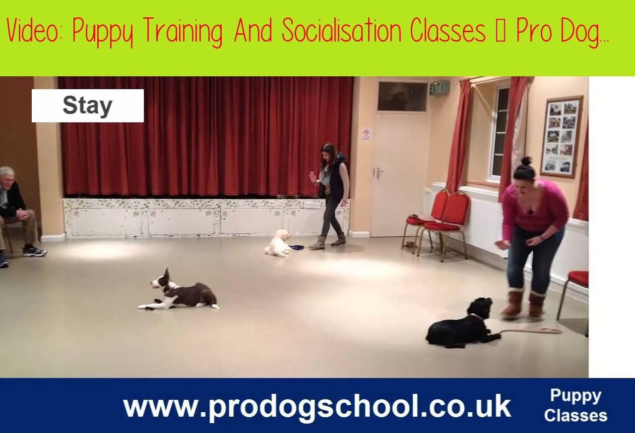 Puppy Training And Socialisation Classes Pro Dog School West Sussex Ukbased In West Sussex We Run Fun Puppy Puppy Training Dog School Training Your Puppy
