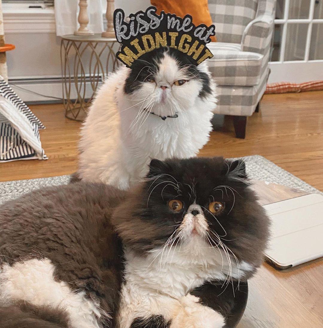 """Cats choose us, we don't own them.""    #persiancat #catsofinstagram #cats #cat #of #persian #catstagram #instagram #catlovers #kitten #catlover #meow #kittens #instacat #persiancats #catoftheday #persiancatlovers #persiancatsofinstagram #love #world #persiancatstagram #pets #petstagram #kitty #mainecoon #fluffycat #catloversclub #kucingpersia #cute #bhfyp"
