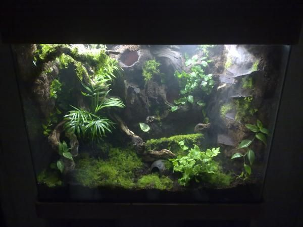 Dart frog tank build reptile forums vivariums and for Fish tank frogs