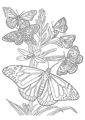 Schmetterlinge Malvorlagen Ausmalbilder Ausmalen Kostenlose Ausmalbilder