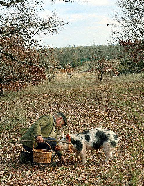 Truffle Hunting Truffle Hunting Truffles Hunting