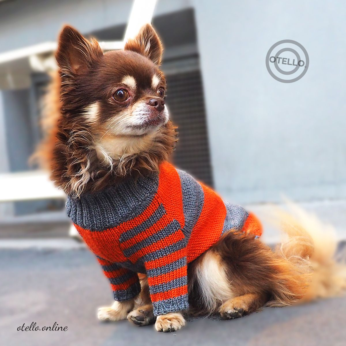 Otello The Merino Dog Pullover There S A Reason That Your Mother Always Told You To Pack A Sweater Dogsweat Susseste Haustiere Hunde Pullover Tierbabys