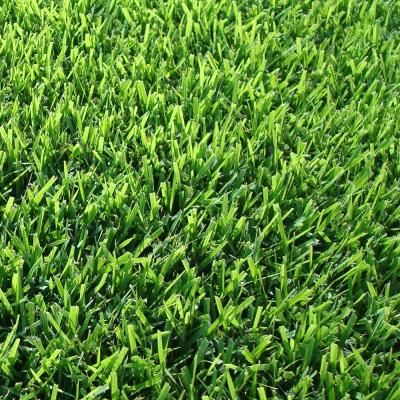 Harmony Zoysia Sod 500 Sq Ft 1 Pallet Hh500z1 The Home Depot Grass Alternative Lawn Alternatives Zoysia Sod