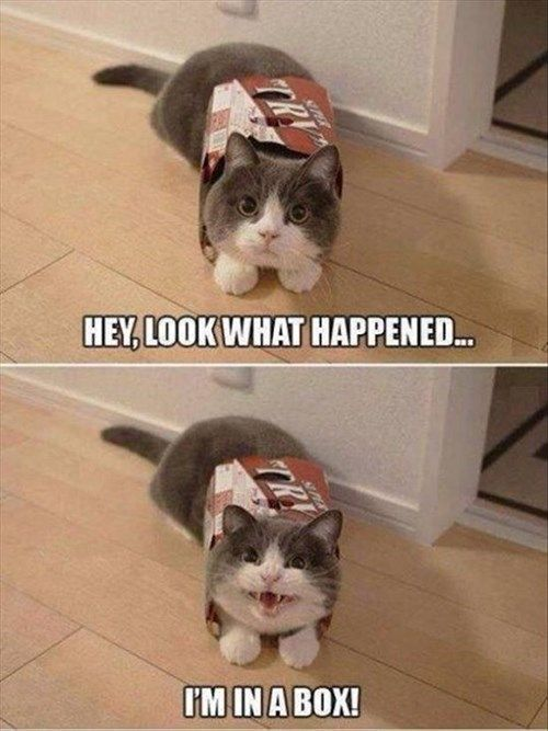 Cute Cats Come in All Different Packages!