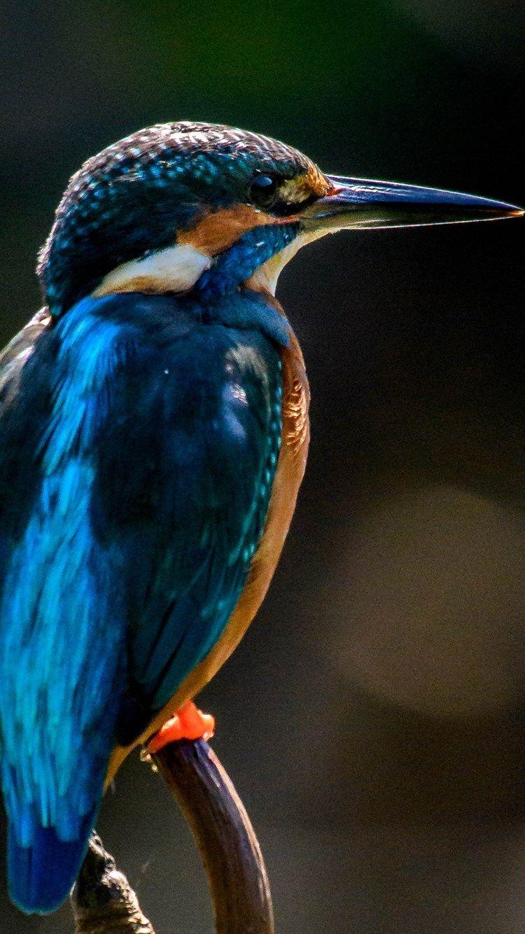 Kingfisher, bokeh, closeup, wildlife, blue bird, small