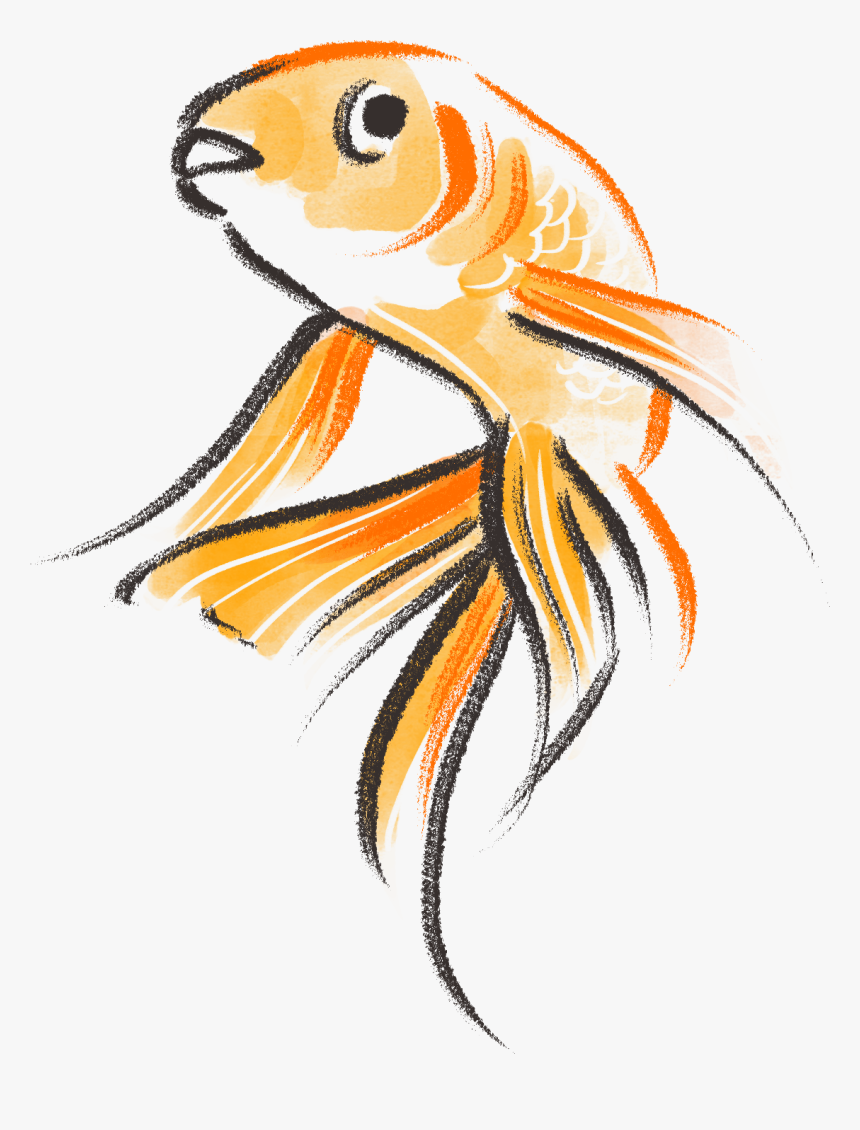 Transparent Gold Fish Png Goldfish Drawing Png Png Download Is Free Transparent Png Image Download And Use It For You Drawings Of Friends Goldfish Drawings