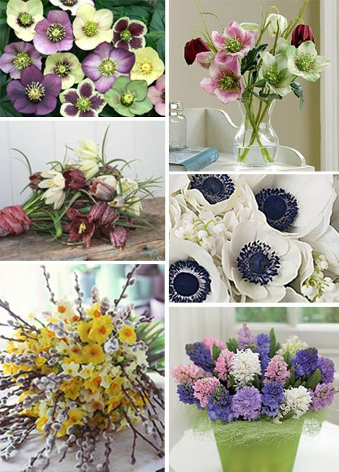 Florist In The Forest S Guide To Seasonal Flowers Part 1 Spring