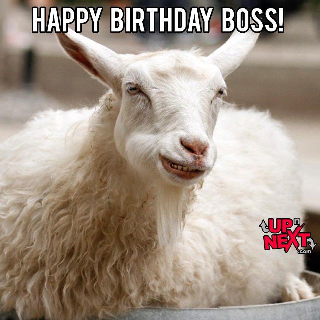 Happy Birthday Boss Meme Funny Boss Birthday Memes Images Happy Birthday Boss Boss Birthday Happy Birthday Boss Funny