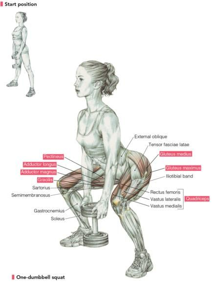 Delavier\'s Women\'s Strength Training Anatomy Workouts: The Squat ...