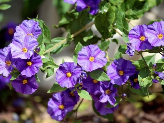 Spectacular Trees For Small Spaces Bush Plant Purple Flowering Bush