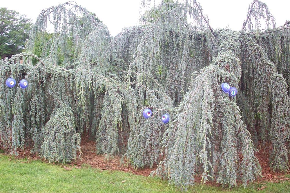 Memphis Botanic Garden-Topiary Monster Plants-My Big ...