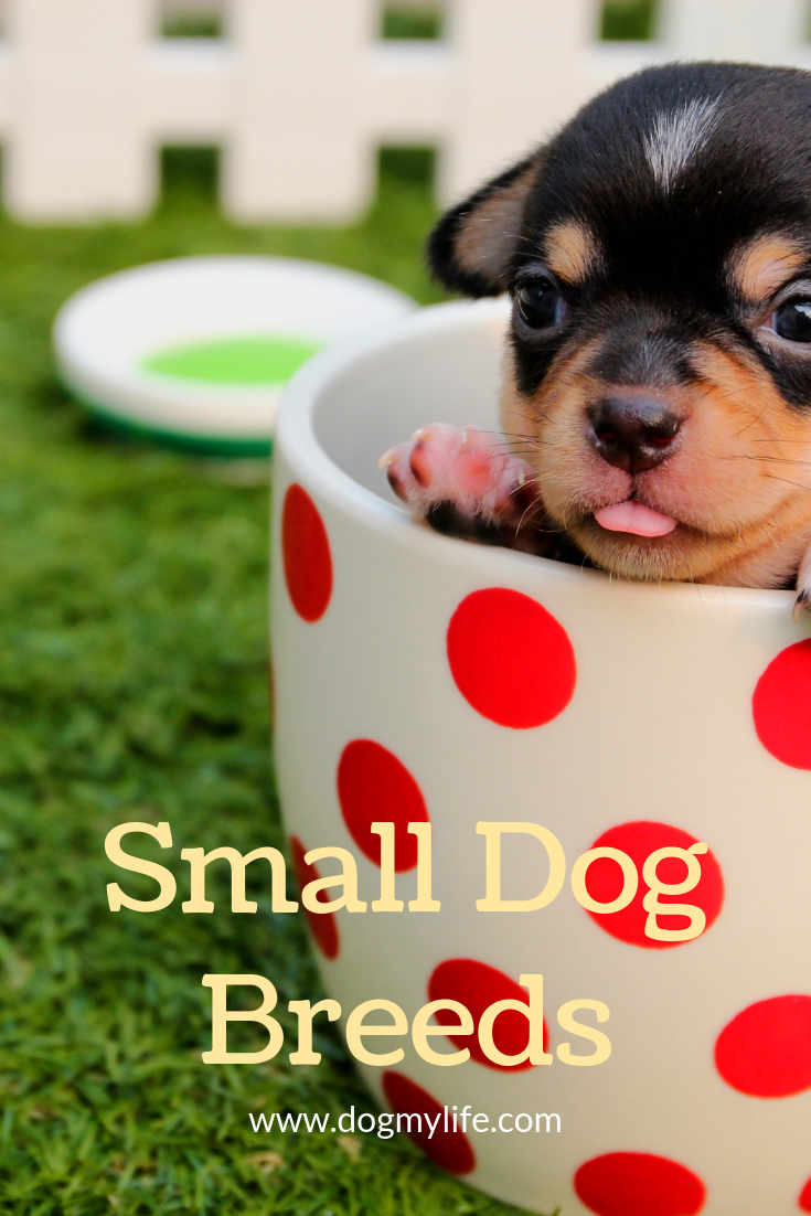 41 Best Small Dog Breeds With Pictures 2020 Nestlords Training Your Dog Pets Dog Training