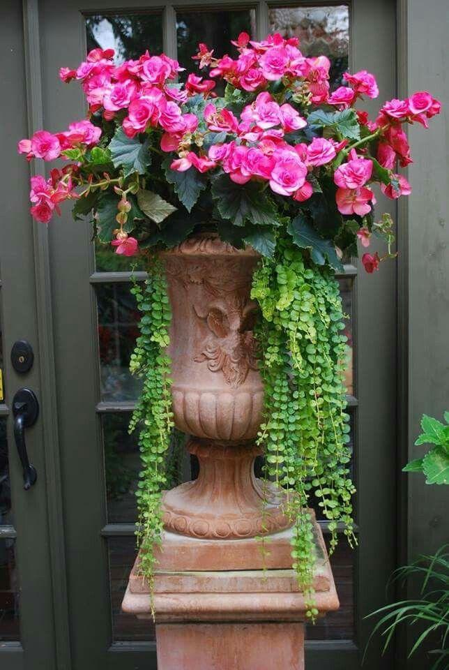 cerca de jardim barata : cerca de jardim barata:1000 ideias sobre Plantas Rasteiras no Pinterest