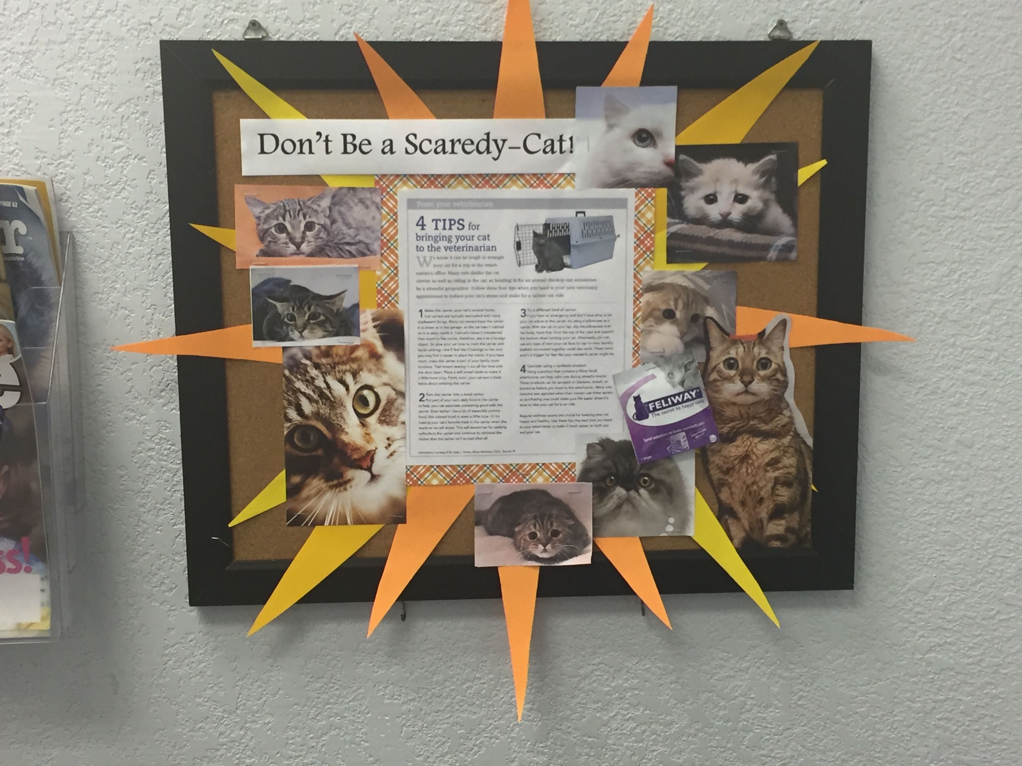 Fighting Fear Cats Vet Clinics Veterinary Tech Veterinary Hospital