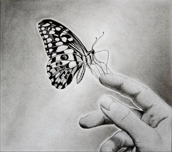 Butterfly On Hand Drawing Butterfly Drawing Beautiful Flower