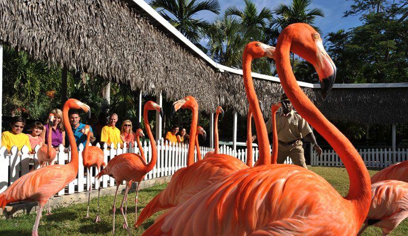 08f70ee6e06b6f7943b9047394783254 - Nassau Bahamas Ardastra Gardens And Zoo