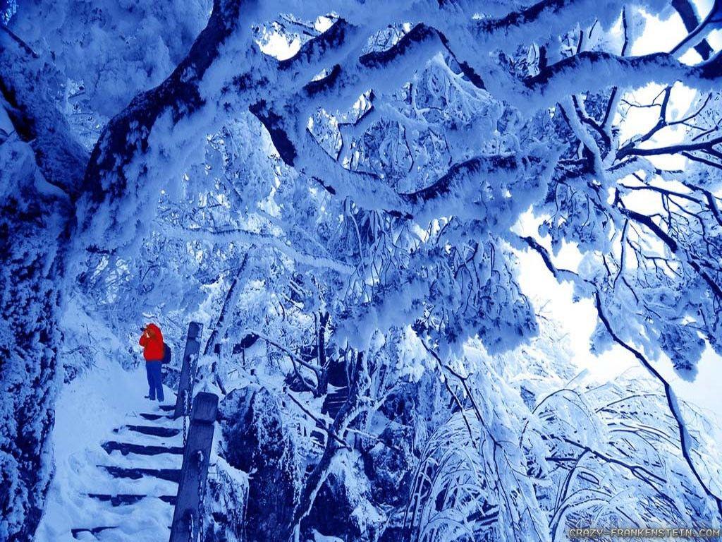 Fantastic Wallpaper High Resolution Winter - 08f74130cc4efcdaef9f970d9875c2b8  Photograph_246032.jpg