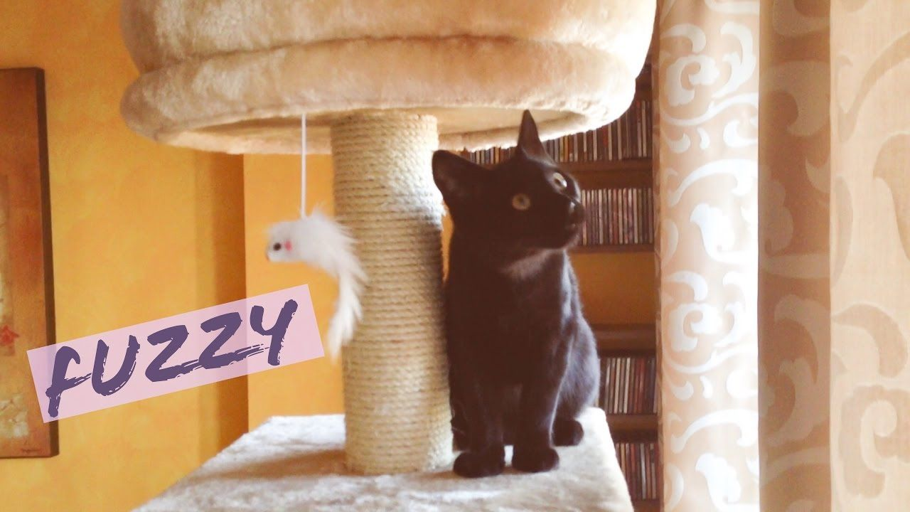 Cats Vlog 25 Fuzzy The Cat Tree Toy Youtube Cute Cat Gif Cats Cute Cats