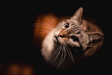 7 Signs that your cat has allergies -  Like humans, cats suffer from allergic reactions to all kinds of things in their environment. It ma - #allergictocats #Allergies #Cat #catcat #cattattoo #catwallpaper #catsandkittens #crazycats #dogcat #petscats #Signs
