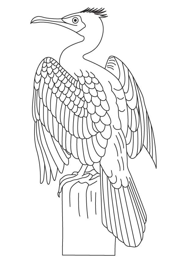 Great Cormorant Coloring Page Coloring Pages Coloring Pages For