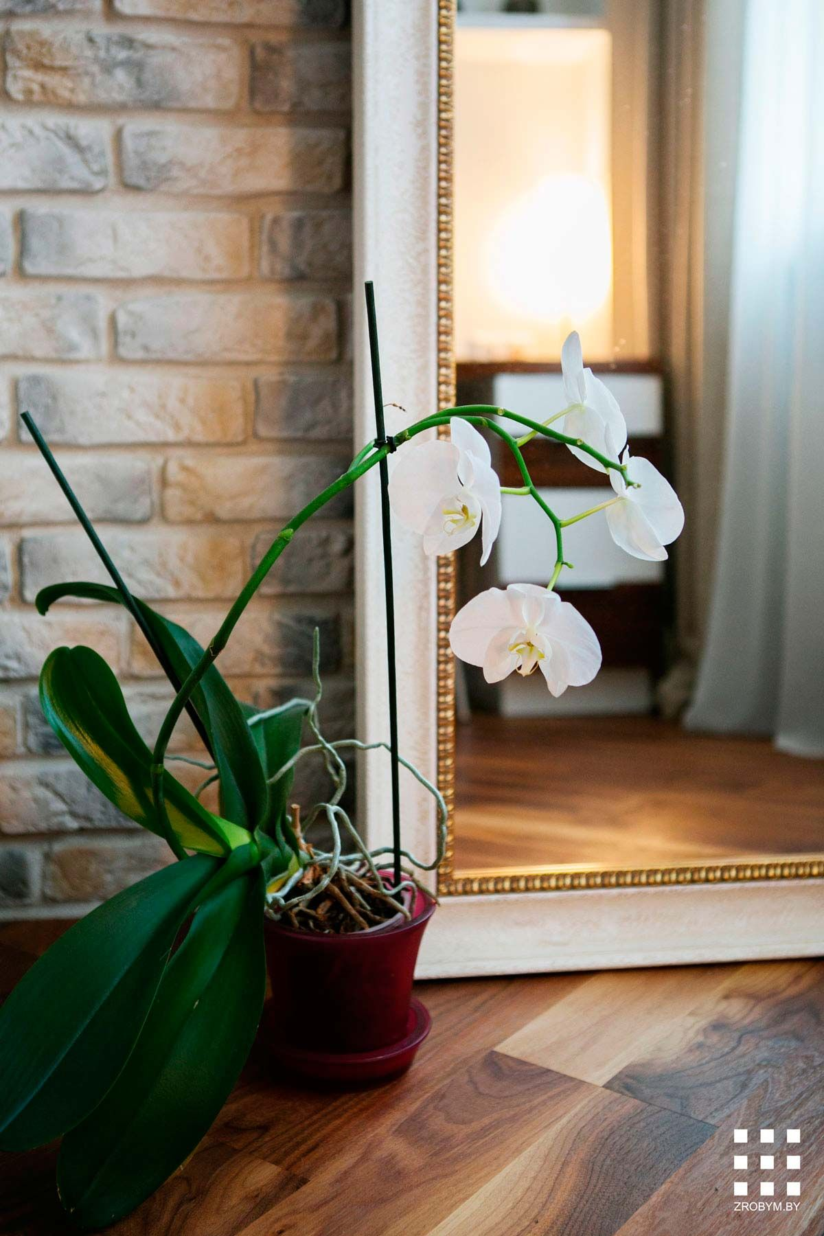 White Orchid Interior