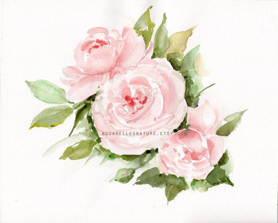 Pale Pink English Roses Original Watercolor Painting Pink Roses