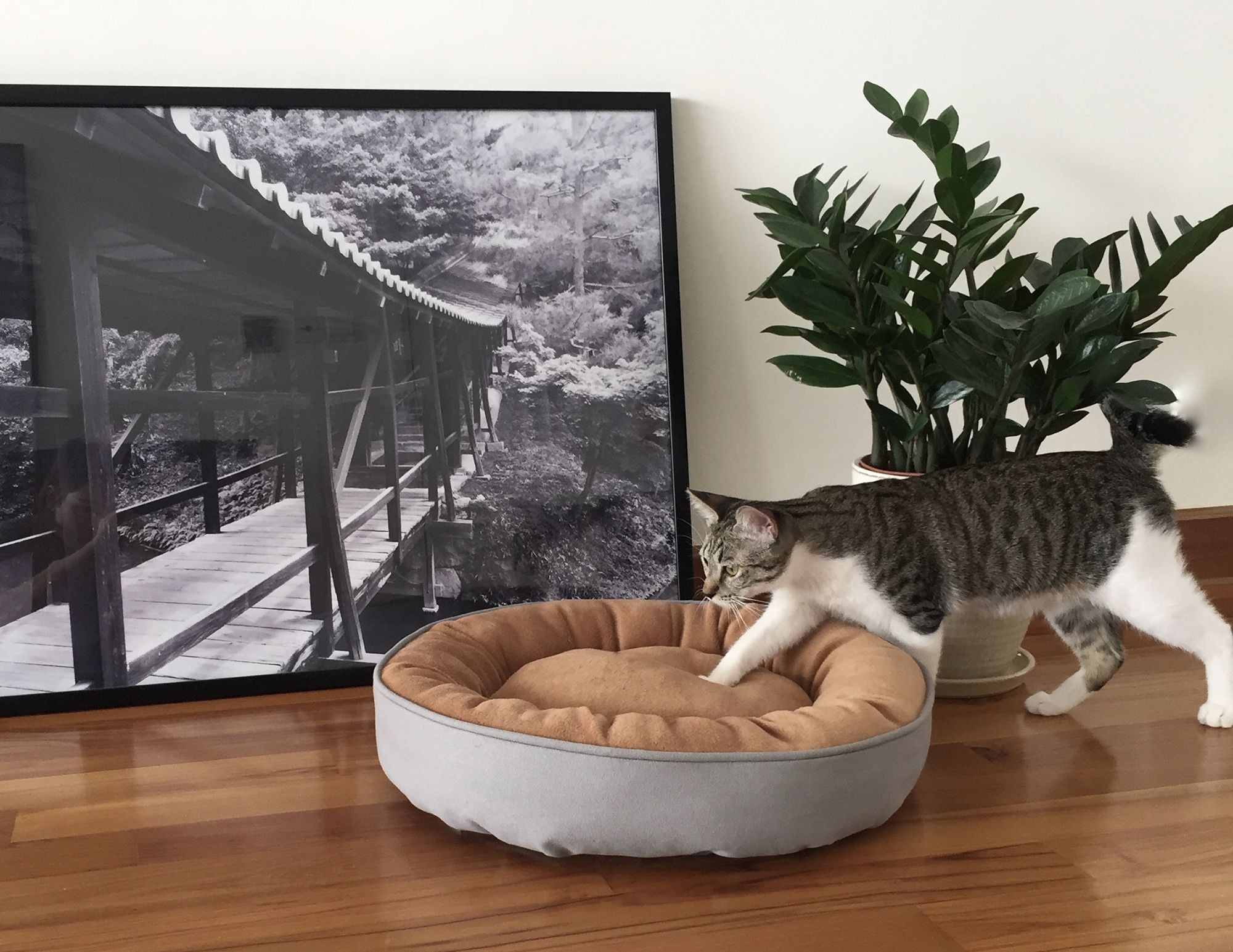 Hush Mood Modern Pet Beds Modern Pet Beds Pet Beds Luxury Cat Bed