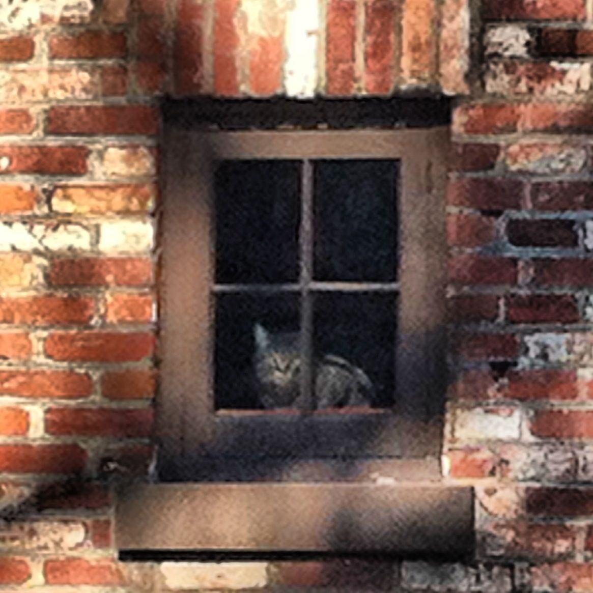 Kitty in the window.