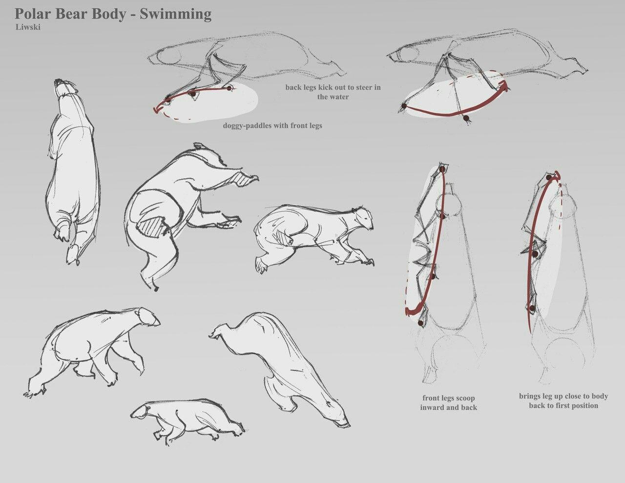 Pin von yana kindle auf anatomy   Pinterest