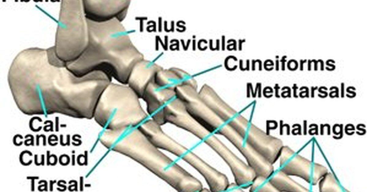Cuántos huesos hay en nuestro pie. El pie humano no sólo debe ...
