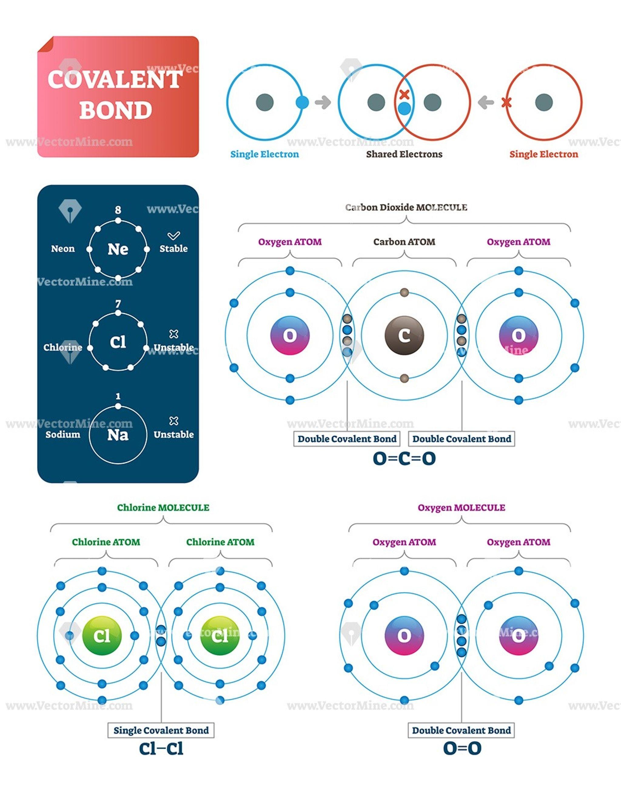 Covalent Bond Vector Illustration Infographic Diagrams