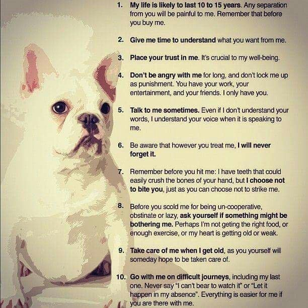 Pin By Sharon Adams On Cuteness Animal Quotes Dog Heaven