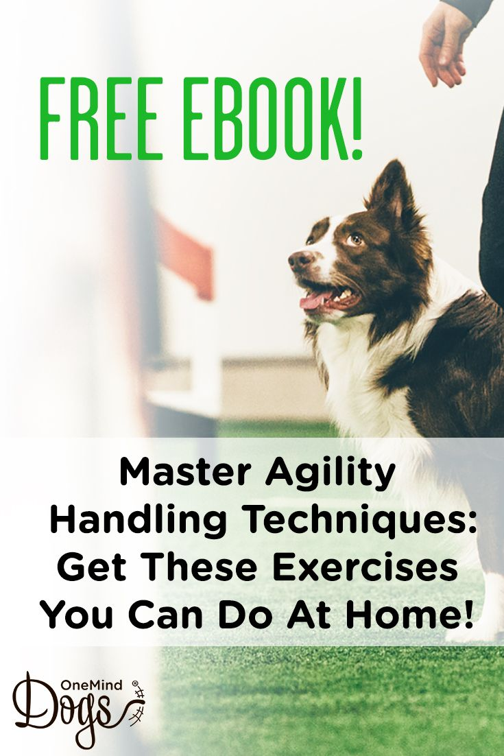 This Free Dog Agility Ebook Gives You All You Need Is Jumps And