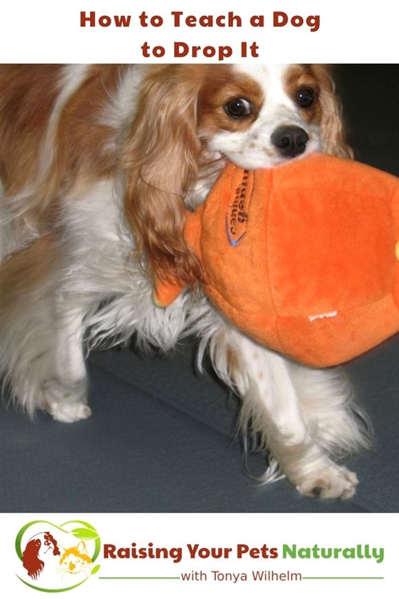 Dog Training Food Dog Training Pinch Collar Dog Training 6 Week