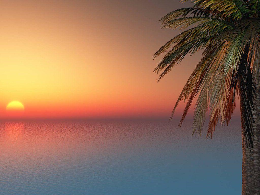 palm trees sunset tumblr. Palm Trees Sunset Tumblr | Desktop Backgrounds For Free HD Wallpaper Wall--art