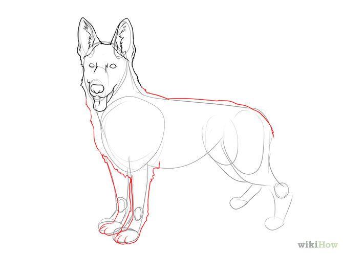 Como Dibujar Un Perro Real 10 Pasos Wikihow Como Dibujar Un