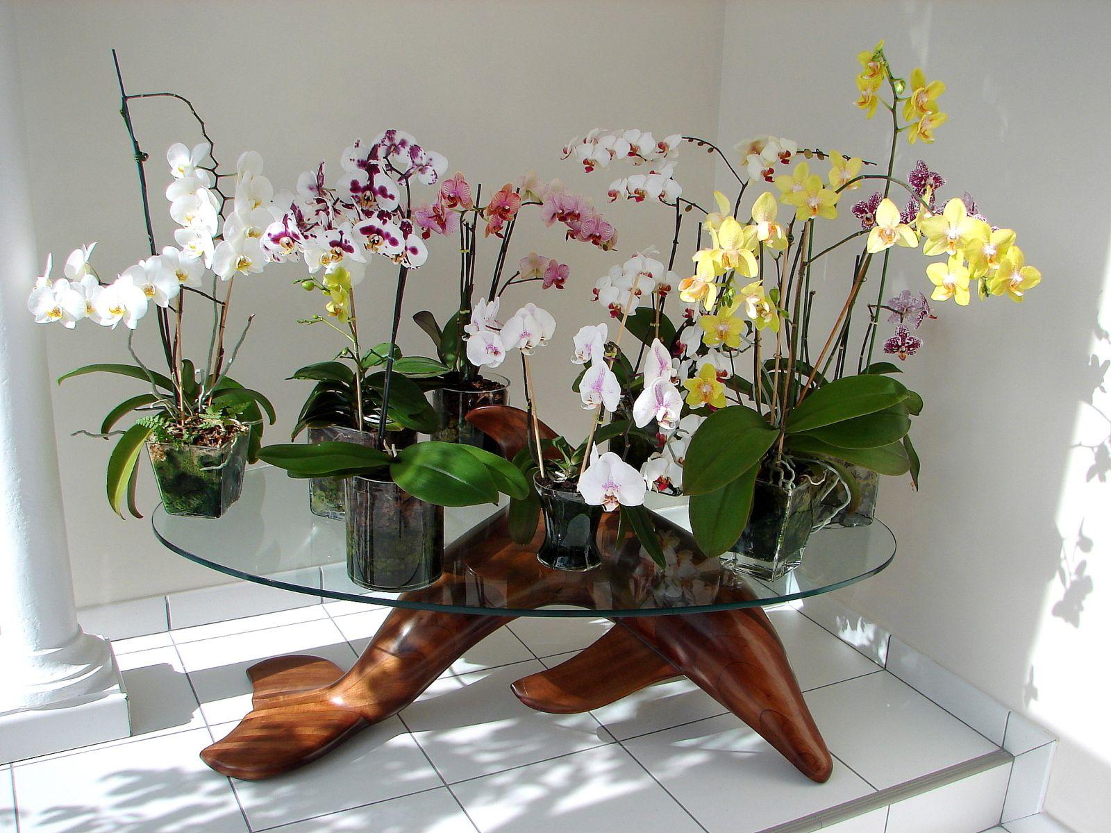 Pour Moi La Plus Belle Table D Orchidees Phaleanopsis Rejane A Invente La Culture En Pot De Verre Depuis 2007 Et Orchidee Projets De Jardins Jardinage Fleur