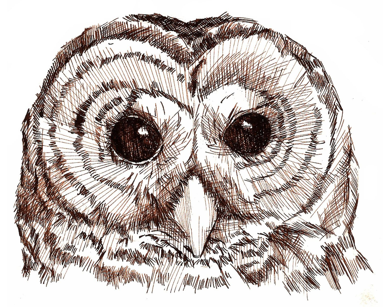 I can't remember what kind of owl this is, but I love it
