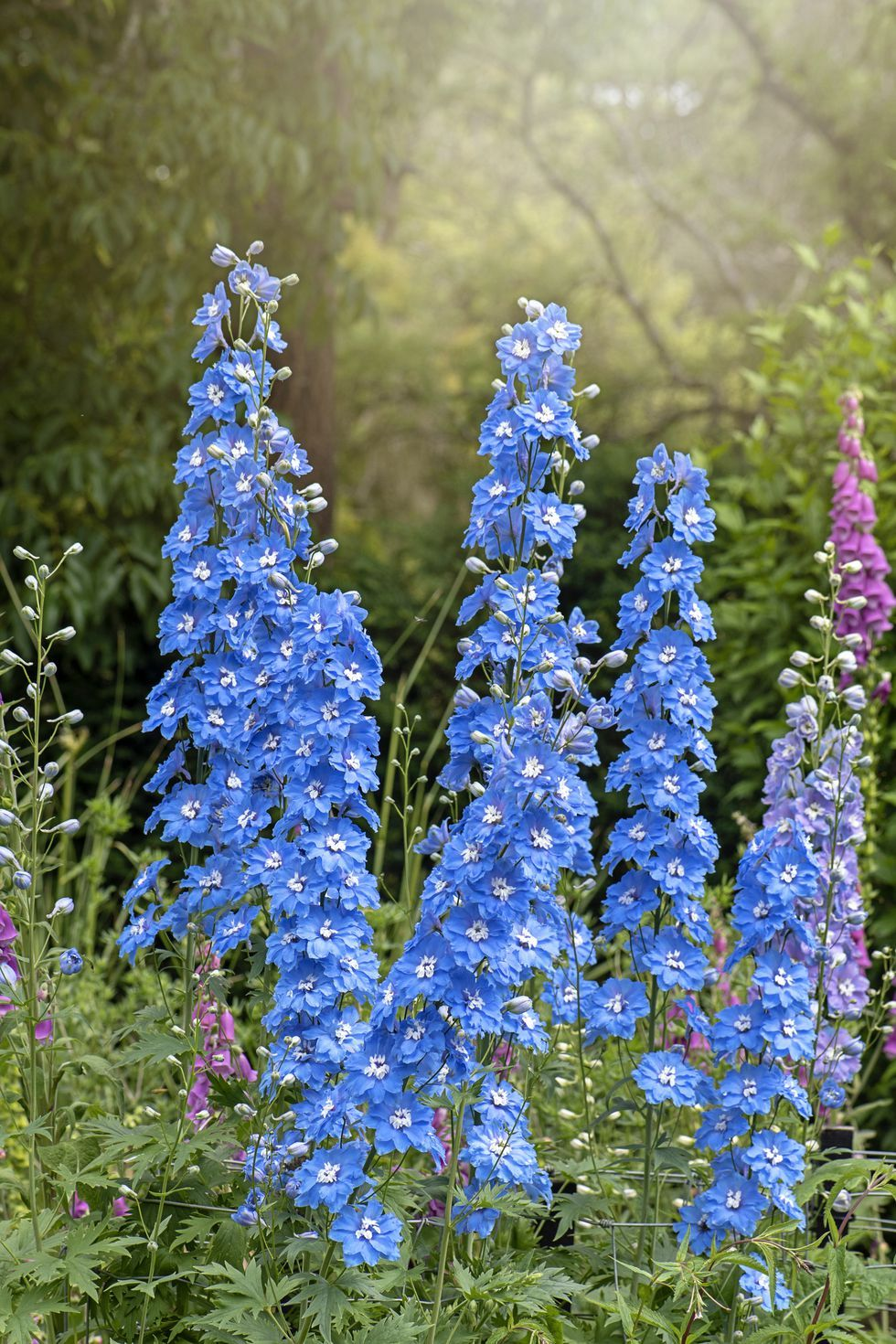 These Are The Best Blue Flowers For Adding The Spectacular And