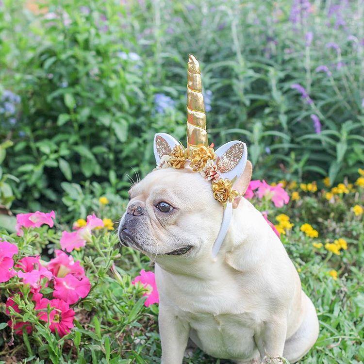 Hello Unicorn . . . . . . igbulldogs_indianapolis