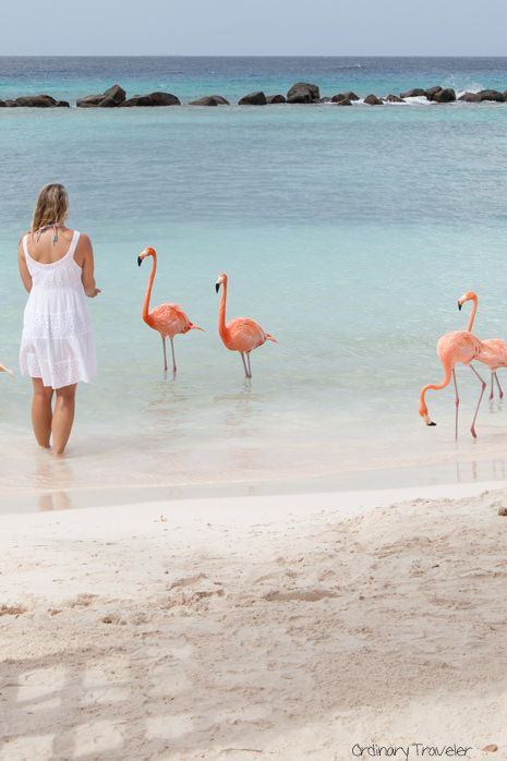 Spend The Day With Flamingo Plus 9 Other Amazing Things To Do In Aruba