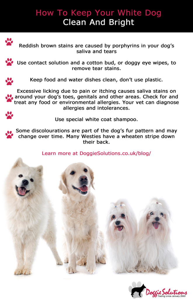 How To Keep Your White Dog S Fur Clean And Bright At Doggie Solutions Online Pet Store Dog Fur White Dogs Dog Bearding