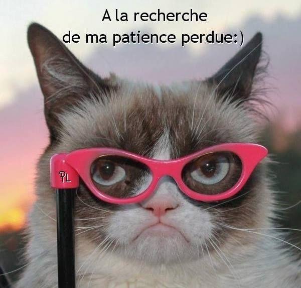 A La Recherche De Ma Patience Perdue Chats Grincheux Droles Memes De Chats Chats Droles