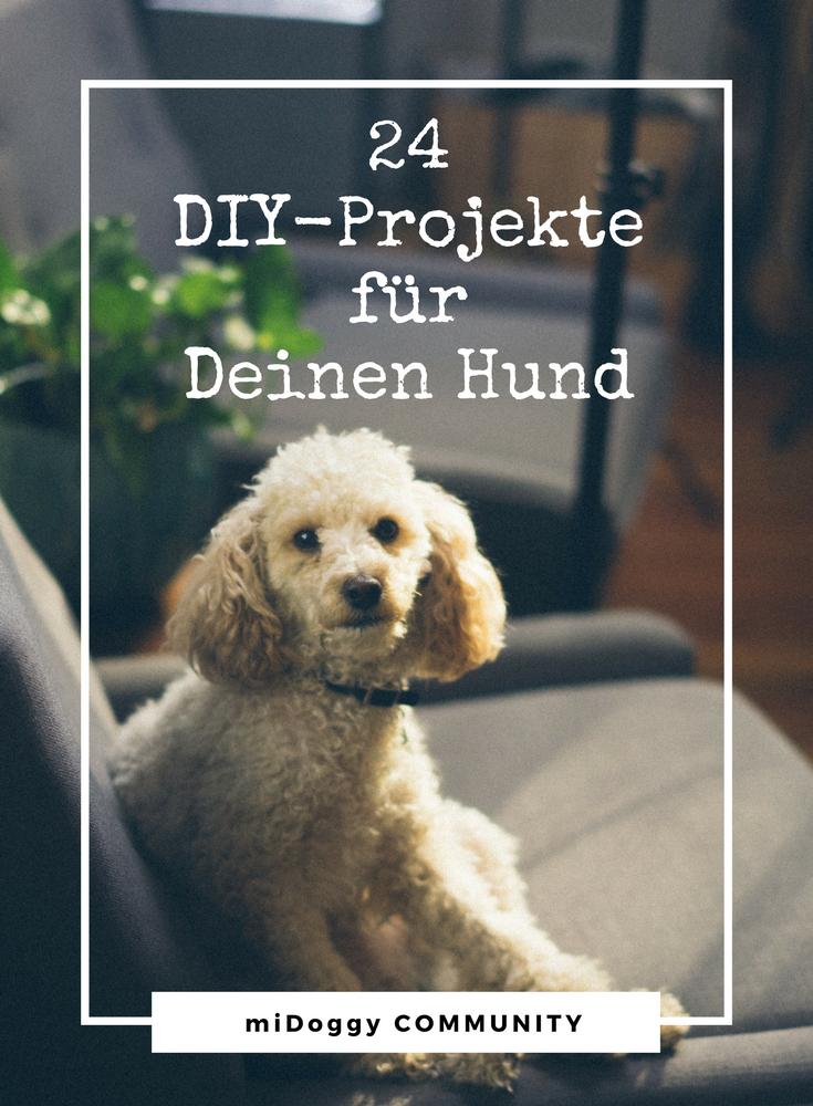 24 diy projekte f r deinen hund diy f r hunde. Black Bedroom Furniture Sets. Home Design Ideas
