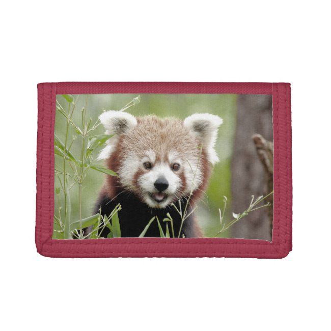 Photo red panda  animals 0586. trifold wallet #red #white #rouge #green #nature #trifoldwallet