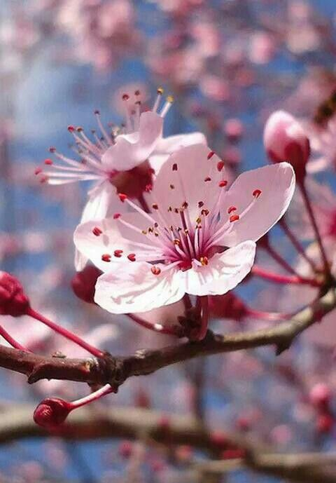 Pin By Chrissy Mayner On Floral Flower Power Cherry Blossom Flowers