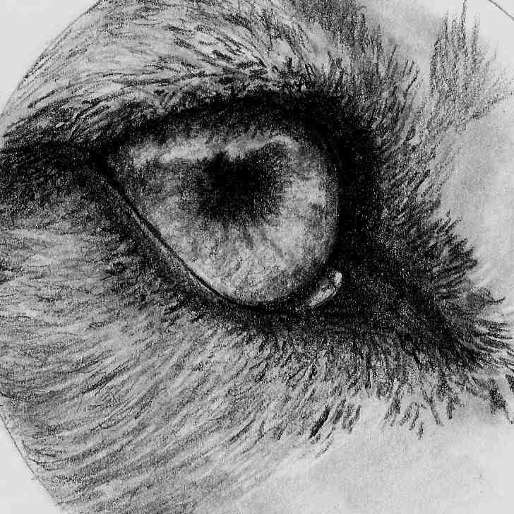 Wolf eye, sketch by me
